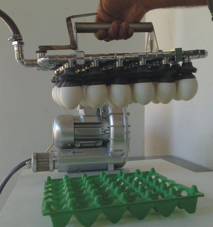 30 Egg Removal Apparatus